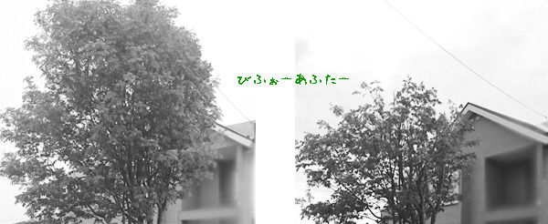 20180602a.jpg